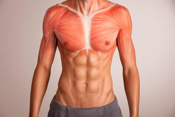 Anatomia jogi